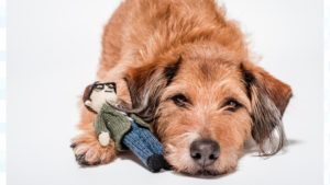 dogs-trust-branding